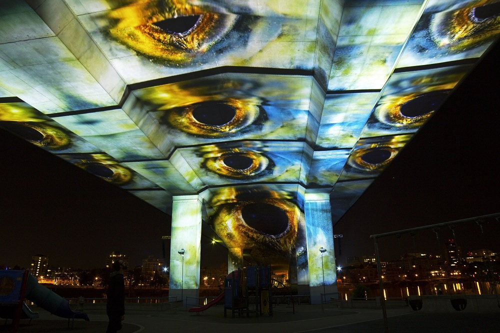 Fish eyes, salmon migration projected under the Cambie Bridge in Vancouver 2017